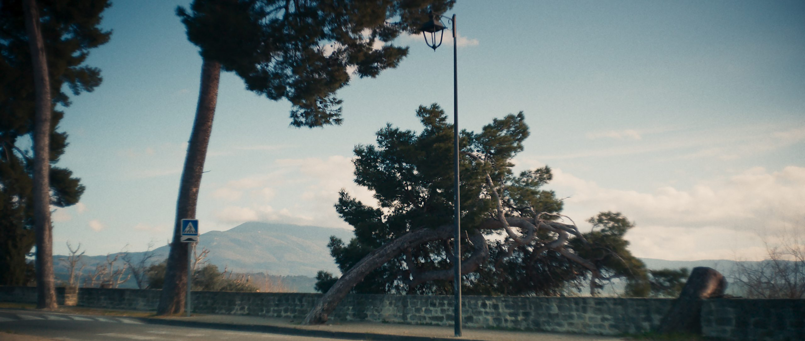Still from the film Un Chanteur Invisible. It's a shot of trees bended by the wind.